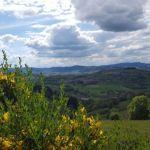 tramayes-paysage-2.jpg_900.jpg